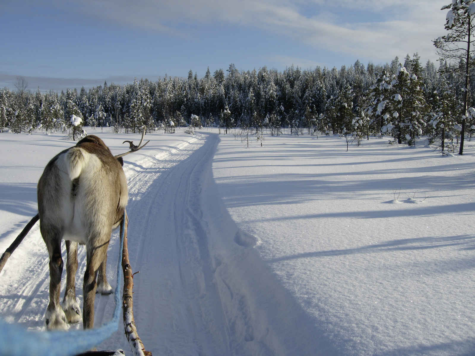 Finlande - Laponie - Meltosjärvi - Auberge de Loma Vietonen